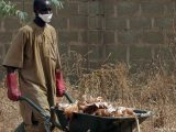 Bird flu infected carcasses being disposed